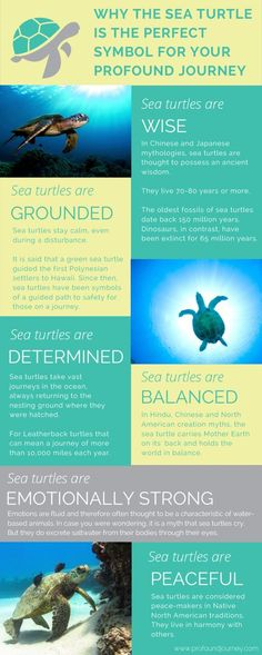 Myths, beliefs and facts confirming why the sea turtle is the perfect symbol for your life transitions and transformations. Women, we invite you to join our tribe at Turtle Spirit Animal, Turtle Quotes, Muster Tattoos, Turtle Love, Lion Turtle, Marine Biology, Animal Totems, Tortoises, Koh Tao