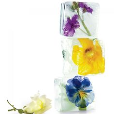 Here's a cool new way to savor the beauty of flowers: Freeze them in ice cubes to brighten drinks. To suspend flowers in the cubes, work in layers: Floral Ice Cubes! Eatable Flowers, Buy Flowers, Real Flowers, Summer Flowers, Floral Flowers, Florals, Flower Ice Cubes, Flavored Ice Cubes, Flavor Ice