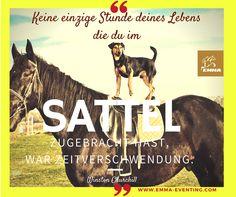 #magengeschwürpferd, www.emma-eventing.com