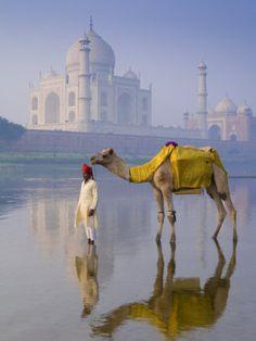 """Camal and Driver, India. Cette image est vraiment belle. Le reflet du Camal et celui du """"Driver"""" sur l'eau est complétement magnifique. En plus, le Camal ressort bien grâce à sa couleur et ainsi que le """"Driver"""". Pour finir, le décors est sans mots."""