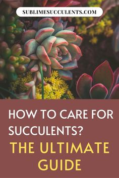 Here are some ways on how to care for succulents. Whenever you bring home a new plant, you should do a little research on how to care for that specific species of succulent or cacti. When it comes to raising succulents, knowledge is power! Here are some general tips for caring succulents. Check this pin! #succulentcare #succulenttips #succulent #succulentgarden Indoor Succulents, Propagating Succulents, Plant Cuttings, Growing Succulents, Succulents Garden, Cactus Plants, Succulent Species, Succulent Seeds, Succulent Care