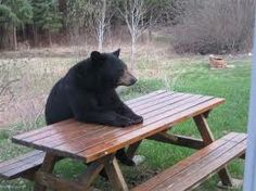 bear sitting on the bench
