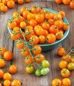plants too tall Sun Gold Hybrid Tomato Seeds Sun Gold Hybrid Tomatensamen Heirloom Tomato Seeds, Heirloom Tomatoes, Cherry Tomatoes, Yellow Tomatoes, Sungold Tomato, Agriculture, Growing Tomatoes In Containers, Grow Tomatoes, Tomato Garden