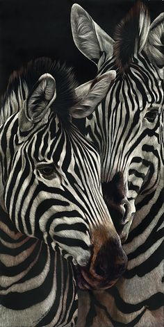 Let Me Tell You Something by Sally Maxwell, master scratchboard artist ~ zebras