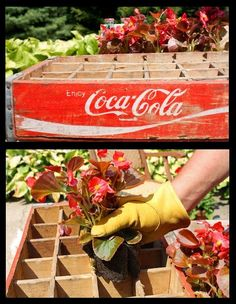 coke crate planter