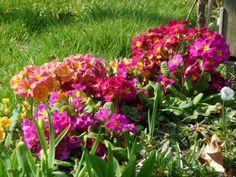Promenade printanière fleurie dans le #parc de Bercy (#Paris 12e) http://www.pariscotejardin.fr/2015/03/promenade-printaniere-fleurie-dans-le-parc-de-bercy-paris-12e/