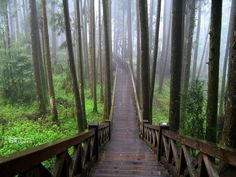 """What do you call those man-made """"wooden paths"""" that are usually found in mountains? Description from english.stackexchange.com. I searched for this on bing.com/images"""