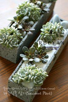 다육식물심기(Succulent Plant)_[플라워스쿨,루시안]플라워전문가코스 :: 네이버 블로그