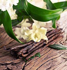La rueda de fragancias abarca todos los aromas, por lo que es un instrumento imprescindible para la comunicación entre especialistas, vendedores y clientes