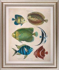 Large Antique Fish I Giclee
