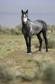 Wild Horse Standing Alone Picture. Wild horse standing alone out on the praire. Tame Animals, Ranch Riding, Horse Galloping, Most Beautiful Horses, Majestic Horse, All About Horses, Wild Mustangs, Horse World, Wild Creatures