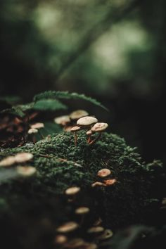 Beautiful Nature Forest Photography Ideas For 2019 Dark Green Aesthetic, Nature Aesthetic, Bokeh, Natur Wallpaper, Fotos Baby Shower, Forest Photography, Winter Photography, Levitation Photography, Exposure Photography