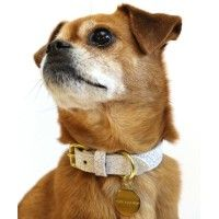 Madison Ave dog collar and leash from Woof NY for mans best friend