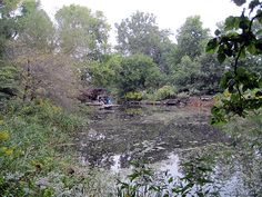 """Lily Pool - Chicago<br/>Photo by Charles Birnbaum:: 2009:: The Cultural Landscape Foundation<br/><a href=""""/albums/lily-pool-chicago"""">View album</a>"""