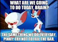 """What are we going to do today, Brain?"" ""The same thing we do every day, Pinky. Try not to fail the bar."""