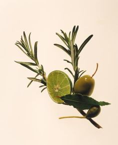 Rosemary, or Rosmarinus officinalis, is used as a spice in Mediterranean dishes. Traditionally, the herb has been used to ease muscle pain and spasm, support the circulatory and nervous systems, ...