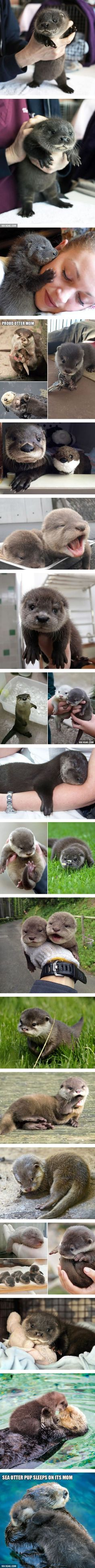 Baby Otters too otterable ! Baby Otters too otterable ! Baby Otters too otterable ! Cute Little Animals, Cute Funny Animals, Baby Otters, Baby Sloth, Tier Fotos, Cute Animal Pictures, Adorable Pictures, Baby Pictures, Most Beautiful Pictures