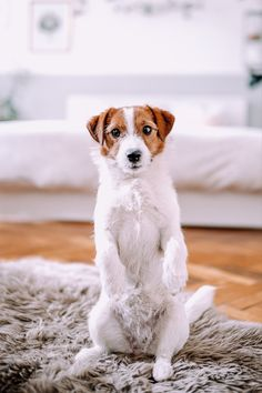 Just a normal Jack Russell living the good dog life in Vienna.  Follow my adventures on Instagram! Dog Life, Vienna, Best Dogs, Adventure, Instagram, Adventure Movies, Adventure Books