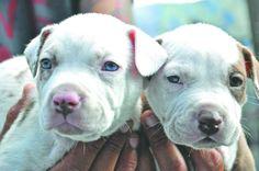 Lista reglamentación para cría y venta de animales