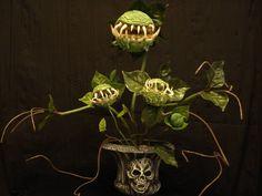 halloween house plant