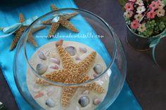 Starfish and seashells on display