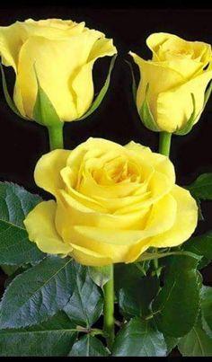 Bom dia com Flores lindas! !!!! - Ibolya Botos - Google+