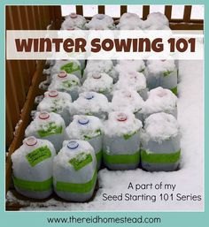 What is winter sowing? Winter sowing is using milk jugs (or other plastic containers) as mini-greenhouses, to start your seed in, in winter. This is a simple tutorial for one of the easiest ways to plant seed. Plant, set outdoors, and then forget about it until spring when its time to transplant!