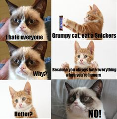 Have a snickers Grumpy Cat Grumpy Cat Source by haekelnerd videos wallpaper cat cat memes cat videos cat memes cat quotes cats cats pictures cats videos Grumpy Cat Quotes, Funny Grumpy Cat Memes, Funny Animal Jokes, Cat Jokes, Cute Funny Animals, Cute Baby Animals, Cute Cats, Funny Cats, Funny Memes