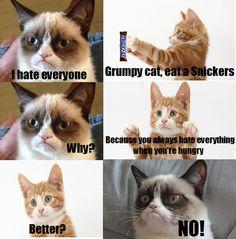 Have a snickers Grumpy Cat Grumpy Cat #GrumpyCat #Humor #Meme