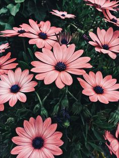 Cute Backgrounds, Aesthetic Backgrounds, Aesthetic Iphone Wallpaper, Wallpaper Backgrounds, Flower Iphone Wallpaper, Soft Wallpaper, Cute Tumblr Wallpaper, Cute Wallpapers, Exotic Flowers