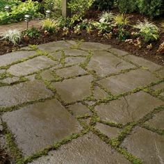Another flagstone patio.  Plants to use between cracks:  Thymus minus   • Spanish sandwort  • Turkish speedwell  • Greek yarrow  • Miniature mat daisy*  • Thyme leaf speedwell    * Good for shady and moist areas