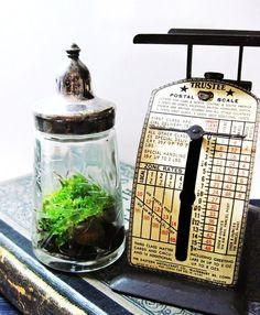 Antique Salt/Pepper Shaker Miniature Terrarium by DoodleBirdie