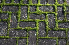 moss and brick path
