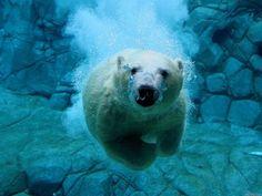 The Underwater Swimmer