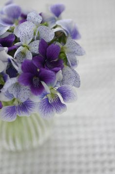 Sweet violets a variation of pansy...but grows wild and has a lovely sweet scent.  Maybe the sweetest smelling wildflower.