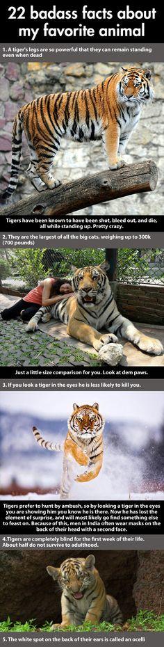 Badass facts about a tiger…1
