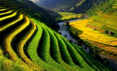 Vietnam -- Photograph by Tho Le Duc, My Shot, Lovely colors of the terraced fields in northern Vietnam (nationalgeographic.com)