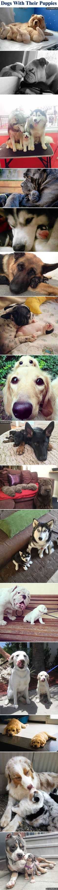Dogs with their puppies Oh my God! Can they all come live at my house?