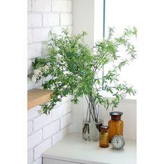 お花なんかを生けるとお部屋がぱっと明るくなりますが、お世話がちょっぴり面倒...そんな中、今オシャレさんに人気なのが、どんな雰囲気のお部屋にも馴染む『枝もの』。花瓶に何本か挿すだけで、結構長持ち、お世話も楽ちん、その上お部屋がぐーんとオシャレになりますよ♡