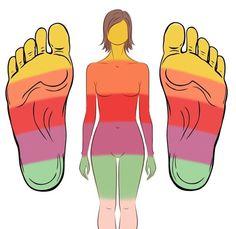 Image représentant la correspondance des zones du pied avec des zones corporelles