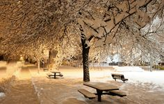 snow | The only montreal snow storm in February | Danny VB | Flickr