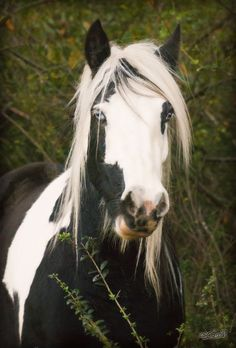 I want this horse...