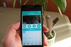 Parrot's Flower Power Plant Sensor Gives You A Mobile Green Thumb | TechCrunch