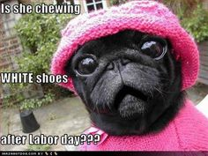 "Happy #LaborDay! Note to Dogs: last day to get those white shoes checked off your ""to chew"" list. #lol"