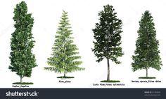 calamagrostis x acutiflora 39 karl foerster 39 feather reed grass jpg 1600 1063 gl pinterest. Black Bedroom Furniture Sets. Home Design Ideas