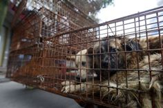 HSI: End The Dog Meat Trade