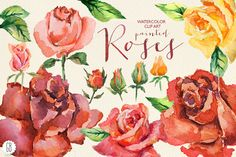 Aquarelle red watercolor roses by GrafikBoutique on Creative Market