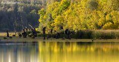 Az Alföld ezer arca – Interjú Papdi Balázs fotográfussal | Életszépítők Colourful Buildings, Happy People, Hungary, River, Sunset, Outdoor, Facebook, Photos, Outdoors