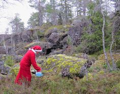 https://flic.kr/p/MmoSS7 | Mrs Santa Claus picking croak berries | Photo T. Pohjanvesi