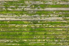 Picture of Background picture made of old green wood boards stock photo, images and stock photography. Free Background Pictures, Wood Background, Apple Wallpaper Iphone, Iphone Wallpapers, Apple Iphone, Industrial Wallpaper, Shades Of Green, Green Colors, Color Inspiration